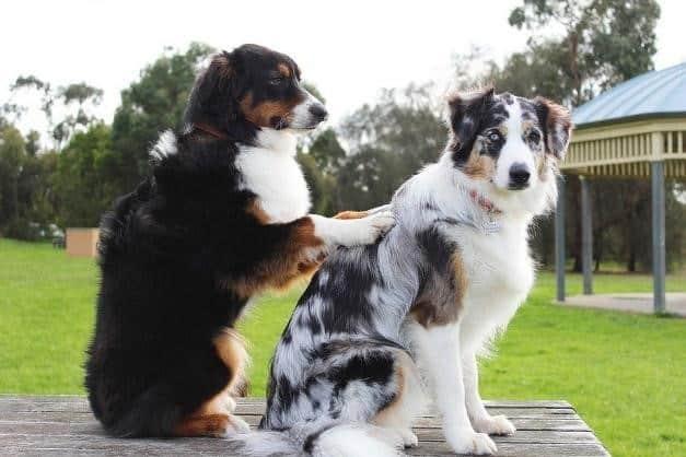 Qu'est-ce que la cani thérapie ?